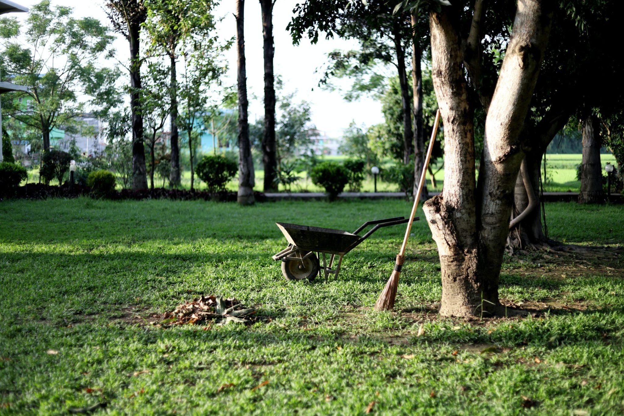 black wheelbarrow near tree during daytime